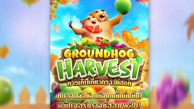 เเนะนำสล็อต Groundhog Harvest